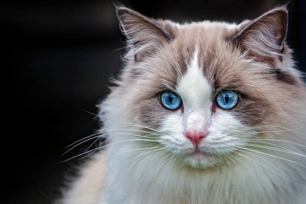 Types of Cat Breeds